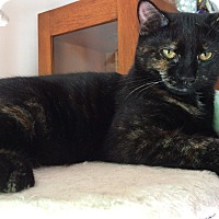 Adopt A Pet :: Polly - Millersville, MD