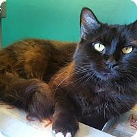 Adopt A Pet :: Havana - North Brunswick, NJ