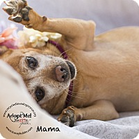 Adopt A Pet :: MaMa - Inland Empire, CA