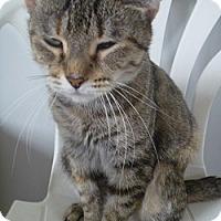 Adopt A Pet :: Thelma - Hamburg, NY