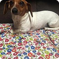 Adopt A Pet :: Louise - York, SC