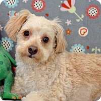 Adopt A Pet :: Billy the kid - Irvine, CA