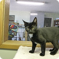 Adopt A Pet :: Aretha - Quincy, CA