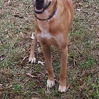 Adopt A Pet :: Shaggy - Gainesville, GA