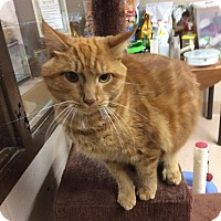 Adopt A Pet :: Garfield - Troy, OH