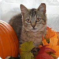 Adopt A Pet :: Autumn Wine - Bristol, CT