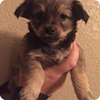 Adopt A Pet :: Dina - Sacramento, CA