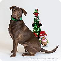Adopt A Pet :: Bertie - Naperville, IL