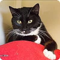 Adopt A Pet :: Nora - Duluth, MN