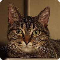 Adopt A Pet :: Meeka - Grayslake, IL