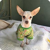 Adopt A Pet :: Rusty - Cedar, MN