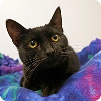 Adopt A Pet :: Thea - Verona, WI