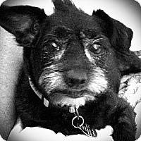 Adopt A Pet :: Mo - Homewood, AL