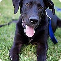 Adopt A Pet :: Brooklyn - San Antonio, TX
