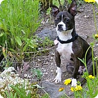 Adopt A Pet :: Tilly  Adopted - Nine Mile Falls, WA