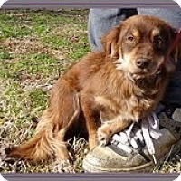 Adopt A Pet :: Emma Lou - Staunton, VA