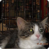 Adopt A Pet :: Jacob - Riverside, RI