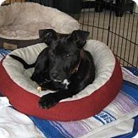 Adopt A Pet :: Baby Candy - Marlton, NJ