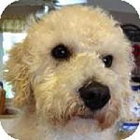 Adopt A Pet :: Frodo - La Costa, CA