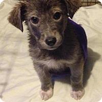 Adopt A Pet :: Chloe - Saskatoon, SK