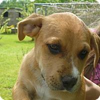 Adopt A Pet :: TITAN - Pawling, NY