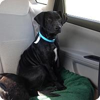 Adopt A Pet :: Danny - Stamford, CT