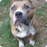 Adopt A Pet :: Madeline - Sacramento, CA