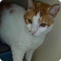 Adopt A Pet :: Hazel Lynn - Hamburg, NY