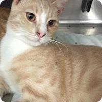 Adopt A Pet :: Luigi - Morganton, NC