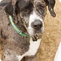 Adopt A Pet :: Pearl - Memphis, TN