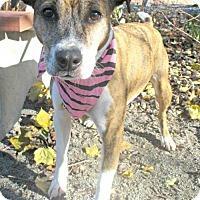 Adopt A Pet :: Nyx - Tyrone, PA