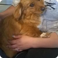 Adopt A Pet :: Max - Rockville, MD