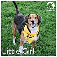 Adopt A Pet :: Little Girl - Pittsburgh, PA