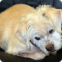 Terrier (Unknown Type, Medium) Mix Dog for adoption in Melrose, Florida - Stonewall