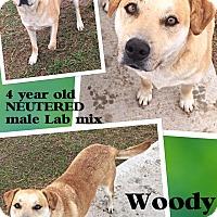Adopt A Pet :: Woody - Woodward, OK