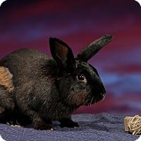 Adopt A Pet :: Teddy - Marietta, GA