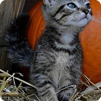 Adopt A Pet :: S'More - Yardley, PA