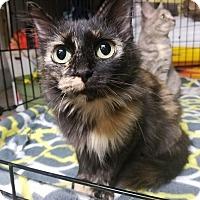 Adopt A Pet :: Denni - Huntington, WV