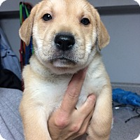 Adopt A Pet :: Fandango - St. Louis, MO