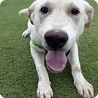 Adopt A Pet :: Wally - Buckeystown, MD