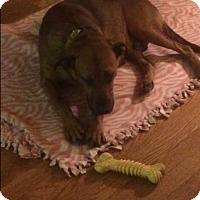 Adopt A Pet :: Girta - Hainesville, IL