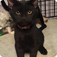 Adopt A Pet :: JETTA - Brea, CA