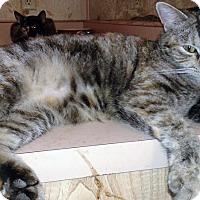 Adopt A Pet :: Ivy - Mission Viejo, CA