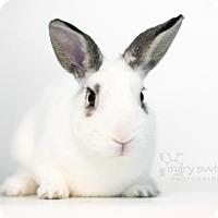 Adopt A Pet :: Casper - Reisterstown, MD