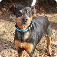 Adopt A Pet :: Naan - Brownsboro, AL