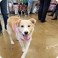 Terrier (Unknown Type, Medium) Mix Dog for adoption in Hainesville, Illinois - Cutie Patutie