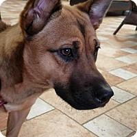 Adopt A Pet :: Kya Marie - Colfax, IL