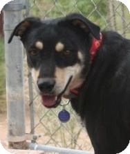 German Shepherd Dog Mix Dog for adoption in Scottsdale, Arizona - Izzy