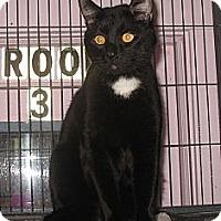 Adopt A Pet :: Tux - Shelton, WA