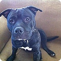 Adopt A Pet :: Diablo - East McKeesport, PA